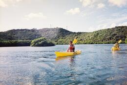 Photo of St Thomas St Thomas Mangrove Lagoon Kayak and Snorkel Tour Kayaking through the mangroves