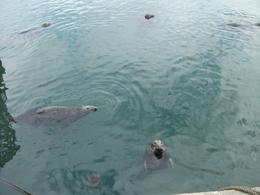 Photo of Dublin Dublin Bay and Malahide Castle Half-Day Tour Seals at Howth