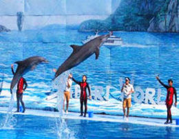 Dolphin show , Alok M - June 2016