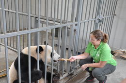 Photo of   Volunteering at the Panda Center