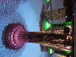 Photo of   Garden by the Bay - Night Tour