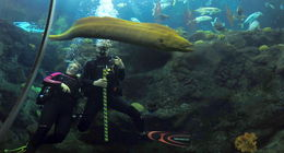 Our Dive masters and a large green moray eel , Daniel M - December 2015