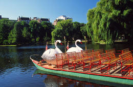 Swan boats in the Boston Common - May 2011