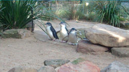 Photo of Sydney Blue Mountains Nature and Wildlife Day Tour from Sydney Blue Mountains & Featherdale Wildlife Park