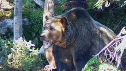 Although they are in a controlled area, still look pretty 'grizzly', Jonathan F - October 2008