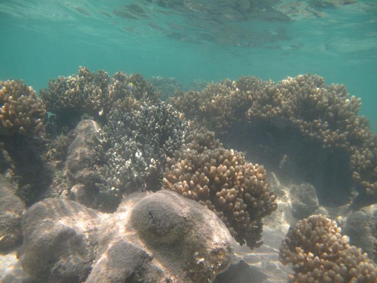 Into the Deep - Cairns & the Tropical North