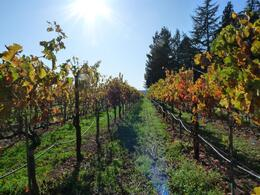 Photo of   Vineyard at Andretti
