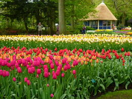 Photo of Amsterdam Keukenhof Gardens and Tulip Fields Tour from Amsterdam amsterdam 067