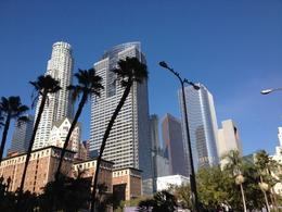Downtown Los Angeles Skyline, Cat - November 2012