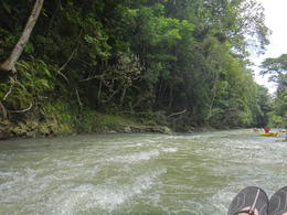 Photo of Montego Bay Jungle River Tubing Safari great river