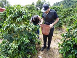 We got to pick some ripe beans too. It was fun and unexpected , Jess - August 2015