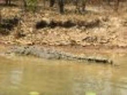 One of the crocs spotted on our cruise , mysticalstar888 - September 2015