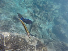 Do yourself a favor and get a Gopro camera for this trip! You won't regret it! , Jomamayounger - October 2015