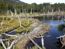 Photo of Ushuaia Tierra del Fuego National Park Half-Day Tour with Optional End of the World Train Ride Beaver Dam