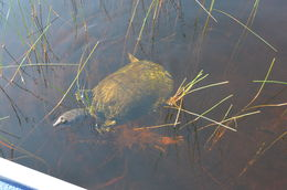 Private Tour: Florida Everglades Airboat Ride and Wildlife Adventure, Richard B - October 2015