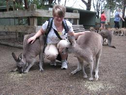 Photo of Sydney Blue Mountains Nature and Wildlife Day Tour from Sydney Kangaroos at Featherdale Wildlife Park
