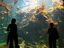 The huge viewing windows are great for viewing the fish in the kelp forest. - November 2009