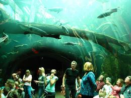 You feel like your underwater when you walk through this tunnel! - November 2009