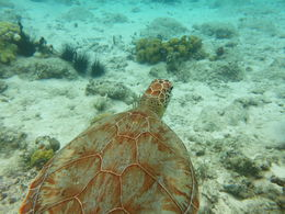 Swam with the turtles, saw ton's of marine life, excellent reef , Walter R - October 2015