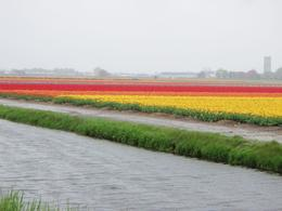 Photo of Amsterdam Skip the Line: Amsterdam and Holland Pass Keukenhof Garden, Lisse.