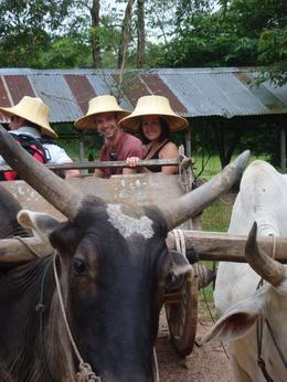 Photo of Bangkok Khao Yai National Park and Elephant Ride Day Trip from Bangkok Ride through ride rice fields