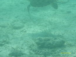 Photo of Freeport Deadman's Reef Snorkeling Tour from Freeport Sea Turtle!!