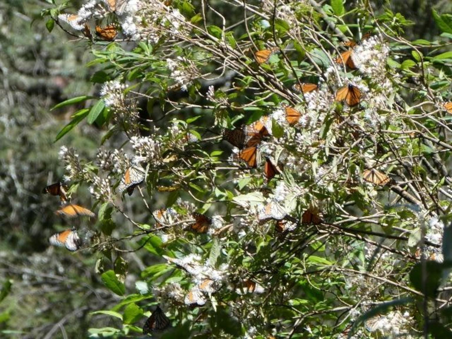 7 Day-Monarch Butterfly Ecofriendly Tour in Mexico