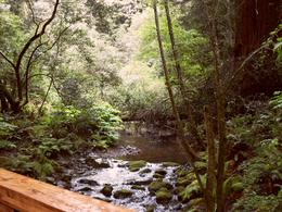 Lovely Stream flowing through Muir Woods., Jennifer D - May 2010