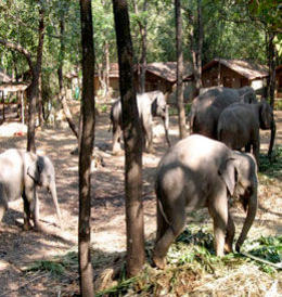 Photo of Goa Private Tour: Jungle Adventure from Goa Including Elephant Ride, Lunch and Dinner Shanti Nature Resort
