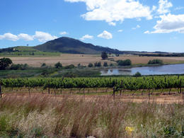Photo of Cape Town Stellenbosch Wine Tour from Cape Town Stellenbosch Vineyard, Cape Town