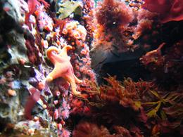 Covered with bright sea anemones and starfish. - November 2009