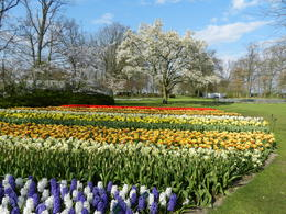 Photo of Amsterdam Keukenhof Gardens and Tulip Fields Tour from Amsterdam Massif de tulipes
