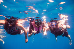Photo of Oahu Waianae Coast Snorkel Cruise with Dolphin and Seasonal Whale Watching from Oahu Under water