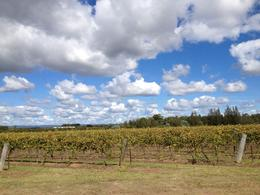 Photo of   Hunter Valley