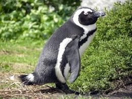 Photo of Cape Town Cape Peninsula Tour from Cape Town Penguin