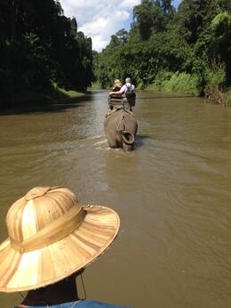 Photo of Chiang Mai Chiang Dao Elephant Jungle Trek and Ping River Rafting Tour from Chiang Mai River Rafting