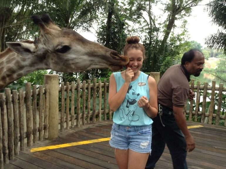 Giraffe Kiss - Singapore