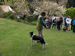 Photo of Queenstown Walter Peak High Country Farm Tour and Cruise from Queenstown The Working Dog