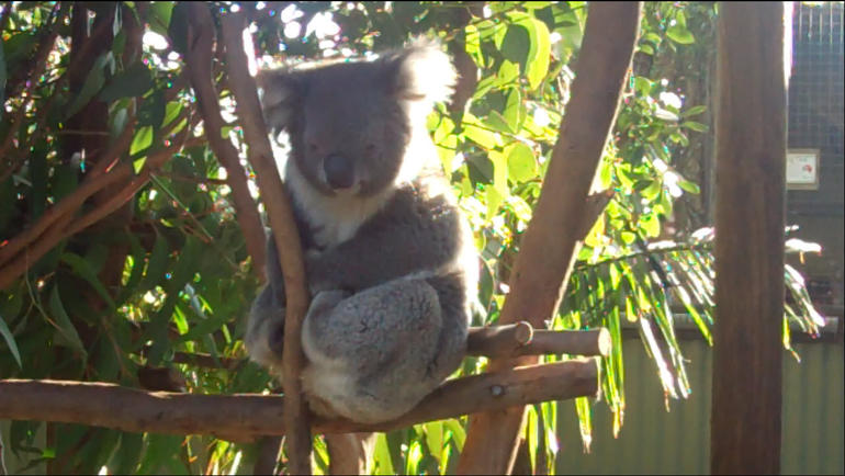 Blue Mountains & Featherdale Wildlife Park - Sydney