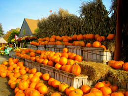 Photo of Boston Fall Foliage Sightseeing Tour from Boston pumpkins!