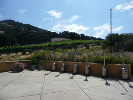 View of the vines, Trina Tron - July 2011