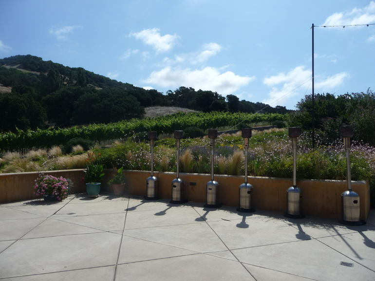 View of the vines - San Francisco