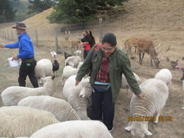 Anelyn Torrecampo feed the sheep at the farm , Clement A - March 2013