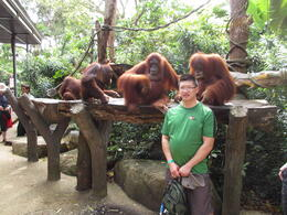 Photo of Singapore Singapore Zoo Morning Tour with optional Jungle Breakfast amongst Orangutans Breakfast Near Orangutans