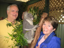 Jim and Cathy W. from Chicago, IL, USA visiting with a Koala at Featherly Wildlife Park outside of Sydney, Australia. , James W - March 2013