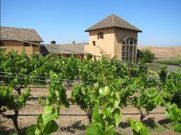 Picture of the product growing with tasting room in background. , Chad H - June 2015