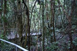 An view from the walkway through the rainforest, SERGIO V - June 2009