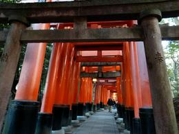 Photo of Kyoto Half Day Small-Group Kyoto Cultural Tour Torii Gates