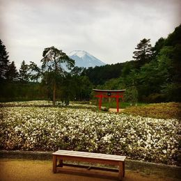 View of Mt. Fuji from the lunch stop within the Ninja Garden , ashley - May 2016