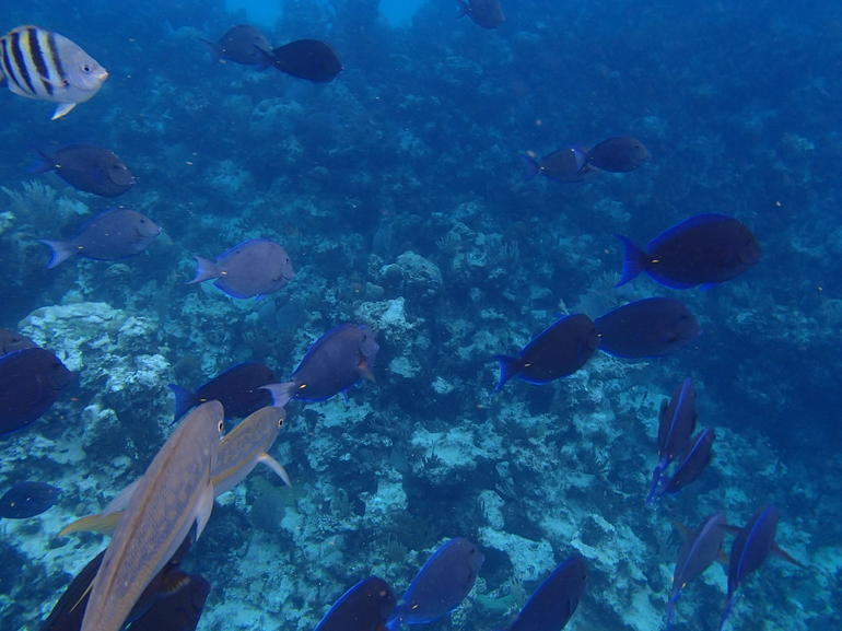 Some more fish and reef - Nassau